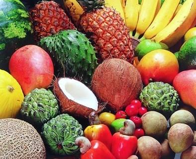 Moçambique organiza I Workshop Nacional de Fruteiras Nativas