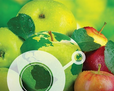 Transitex marca presença na Fruit Attraction 2019
