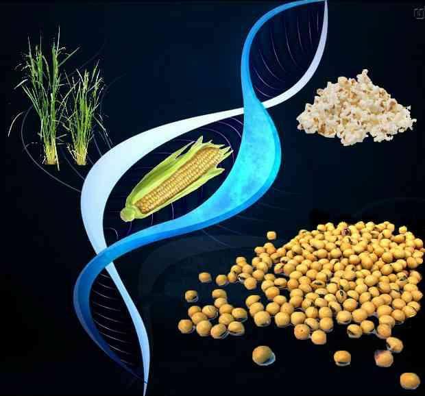 Biotecnologia e genetica