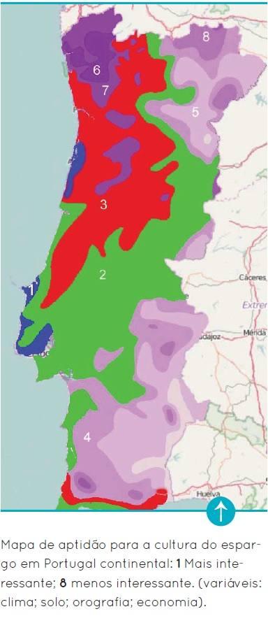 Cultivo De Espargo Em Portugal Dificuldade Ou Oportunidade
