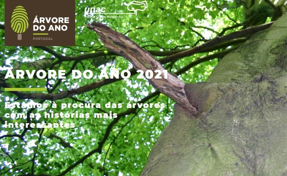 Árvore do Ano 2021