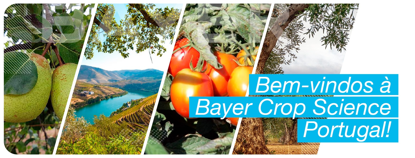 Bayer Crop Science Portugal