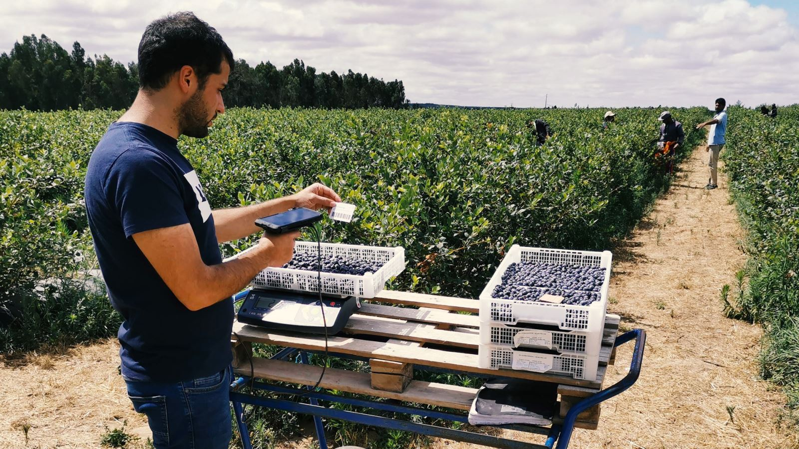 gestão de produção agrícola