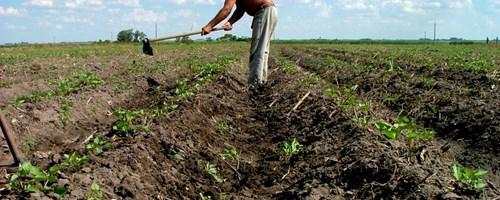 Programa Jovem Agricultor é aposta do Governo Regional dos Açores