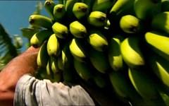 Agricultores pedem maior regulação no Setor da Distribuição